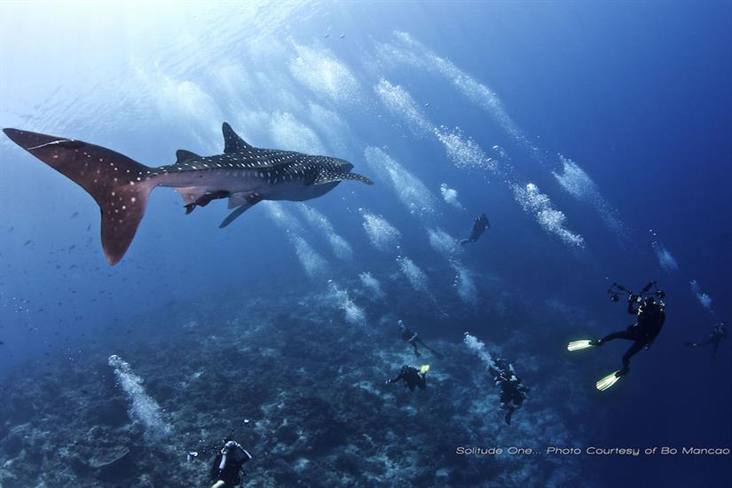 Amazing diving onboard Solitude One Liveaboard