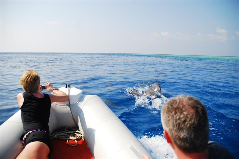 Dolphin spotting in the Maldives