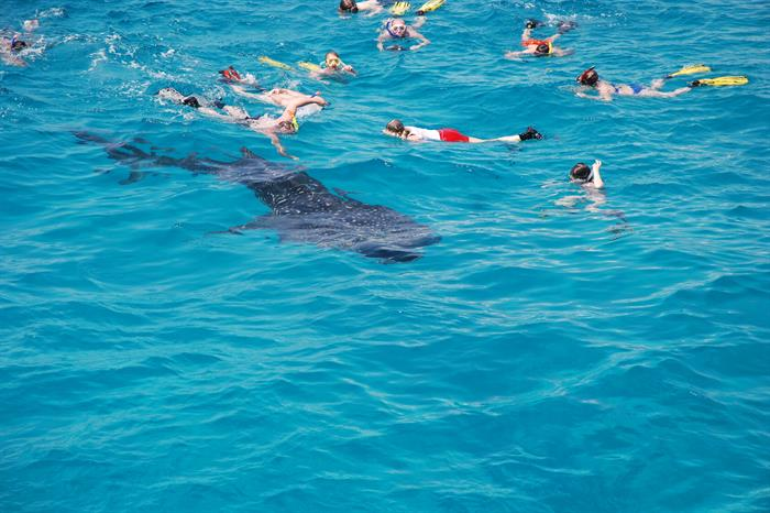 Snorkelling with Whale Sharks in the Maldives