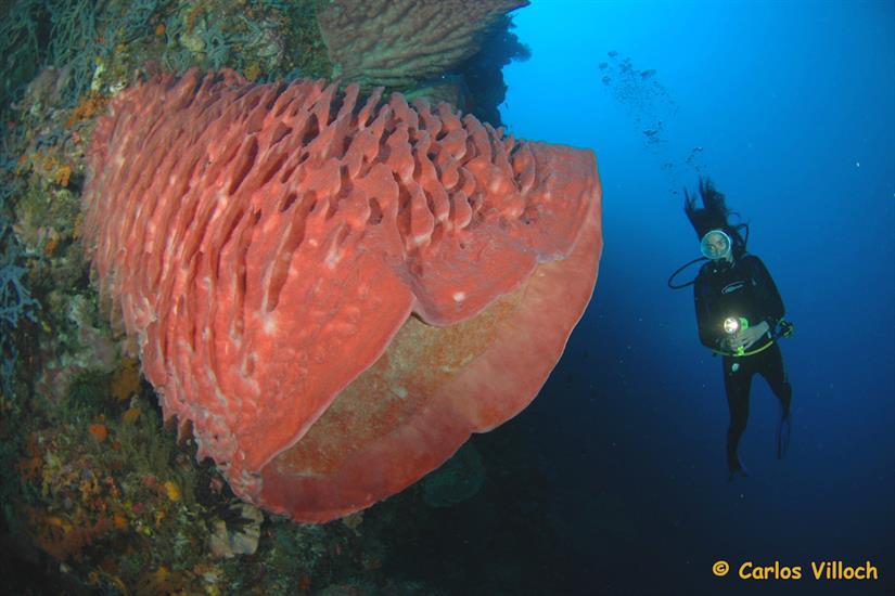 Beautiful reefs in Alor