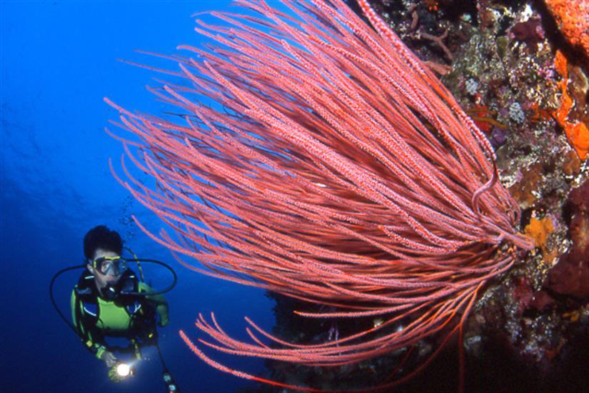 Stunning corals in Komodo