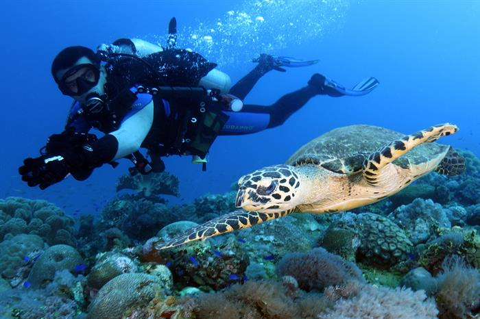 Hawksbill Turtle Micronesia