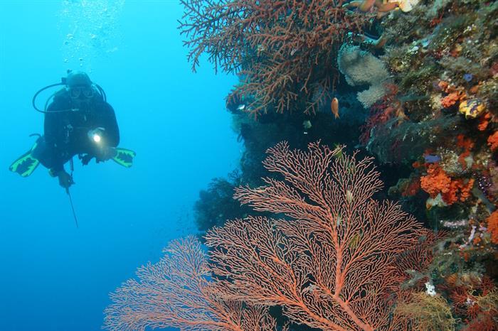 Stunning corals in Raja Ampat