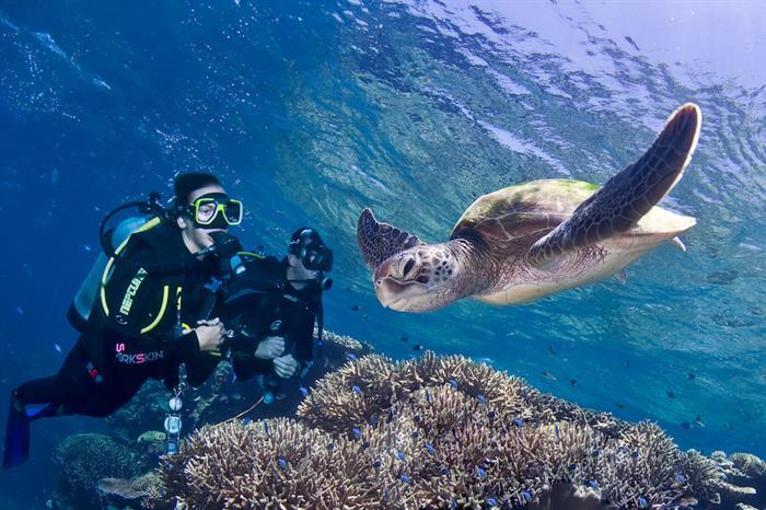 Turtle cruising by in the Great Barrier Reef - ScubaPro II