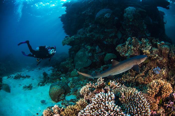 Great marine diversity - ScubaPro III liveaboard, Australia