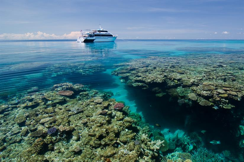 Beautiful corals and water - ScubaPro III