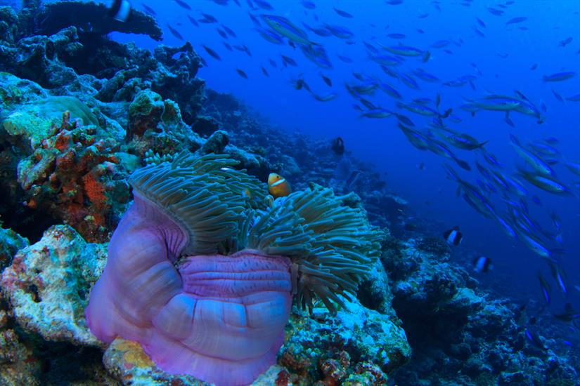 Amazing fish and corals diving the Maldives