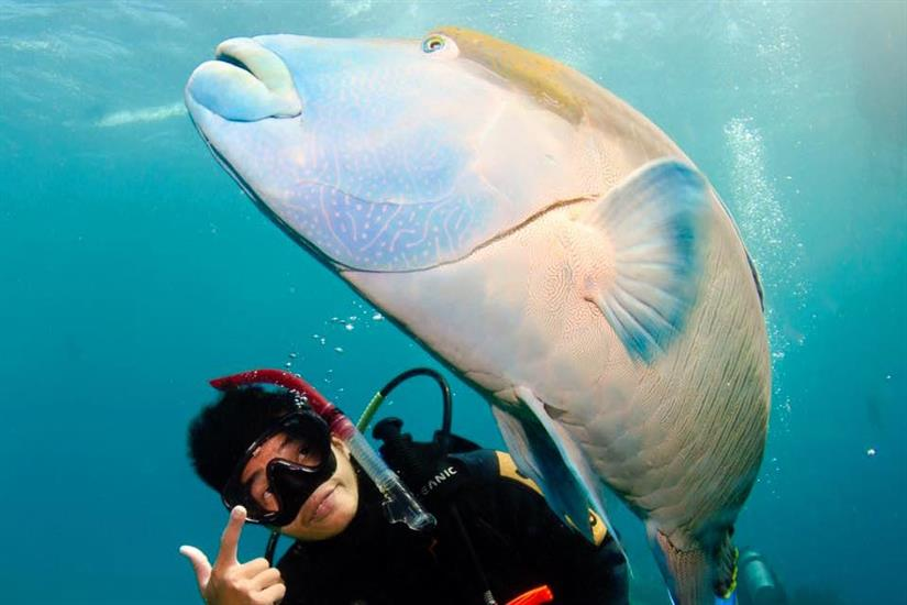 Up close and personal with the friendly marine life
