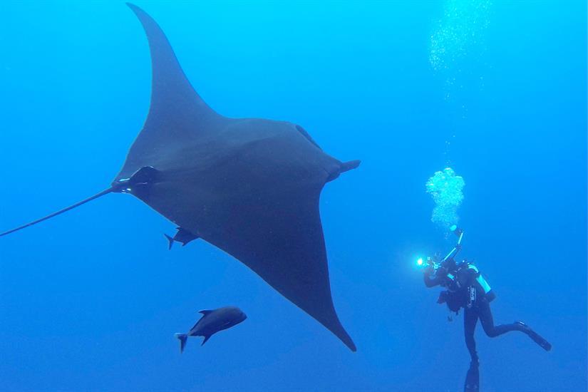 Encounter large pelagics - Nautilus Explorer
