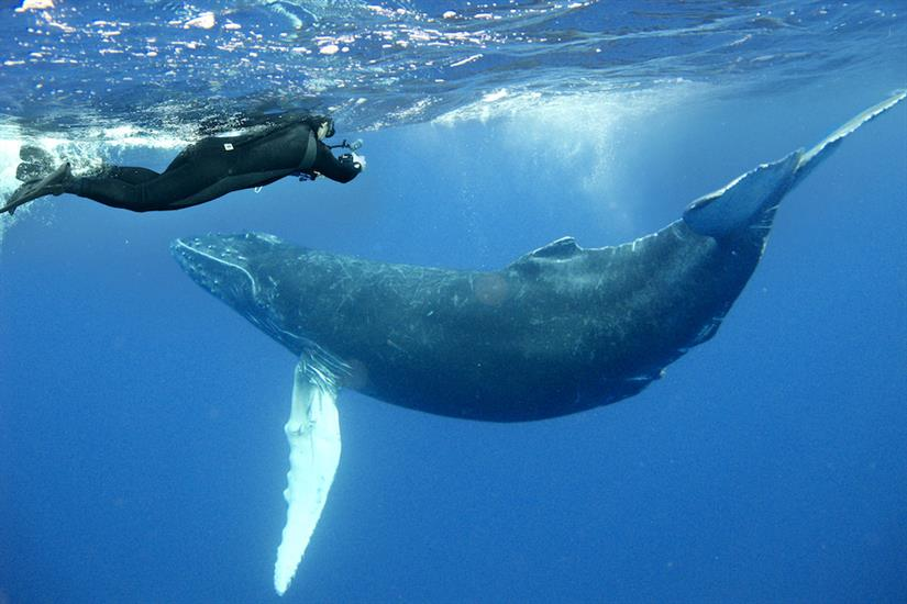 Magnificent marine life encounters - Nautilus Explorer