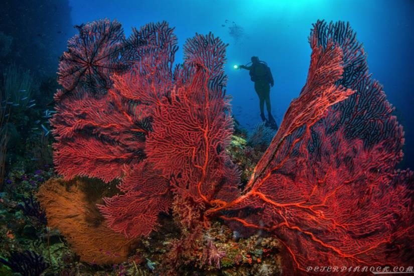 Solomon Islands diving Bilikiki Liveaboard