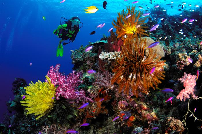 Explore spectacular. healthy reefs in PNG - Febrina liveaboard