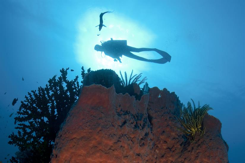 Unexplored areas to dive in PNG - Febrina