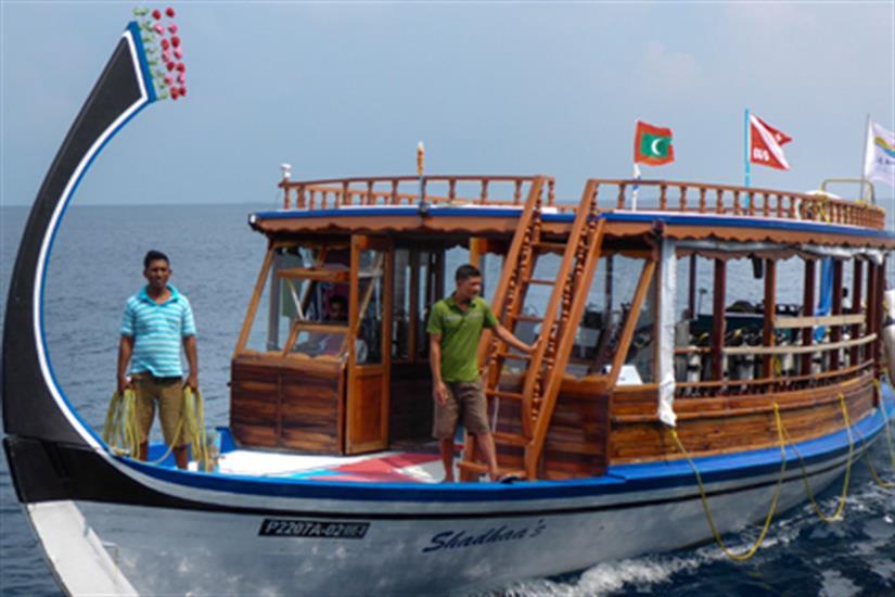 Dedicated diving Dhoni - Blue Shark 2