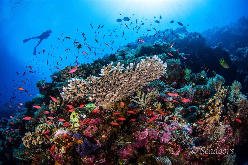 Beautiful Reefs - Philippines