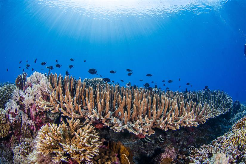 Beautiful Corals in the Philippines