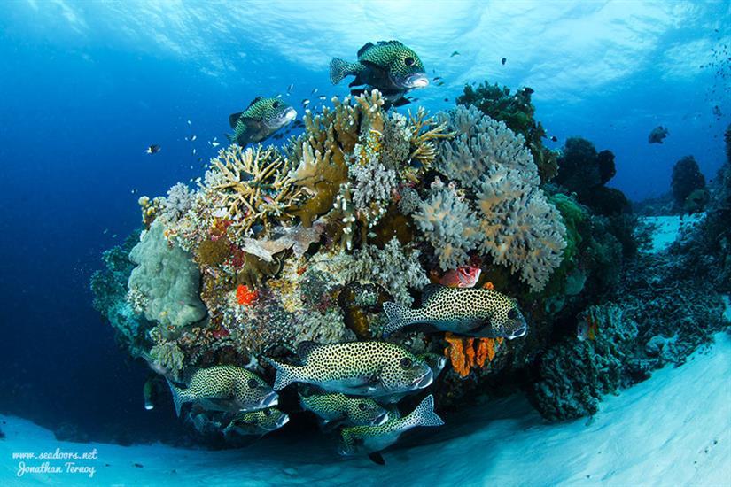 Beautiful Reef Scuba Diving Seadoors Liveaboard Philippines