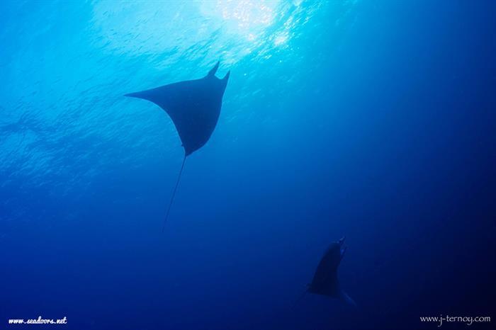 Devil Rays Seadoors Liveaboard Philippines