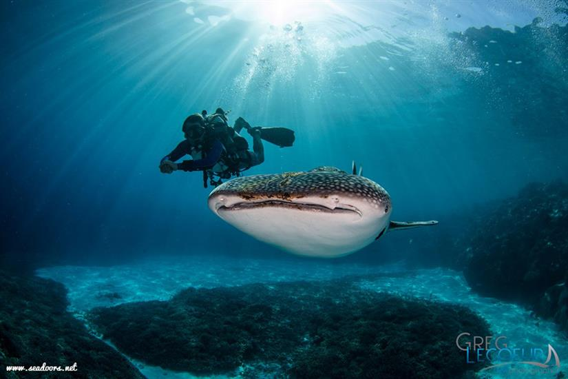 whale shark pierlo