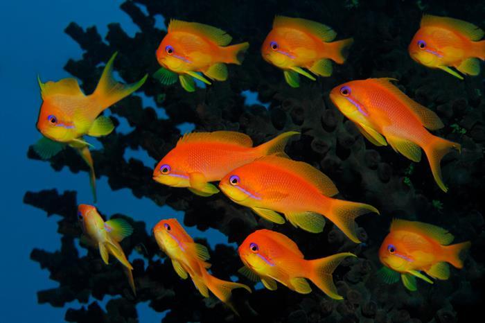 MY Sheena Liveaboard Maldives Healthy Reefs