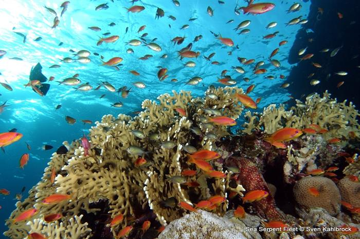 Beautiful Red Sea reefs