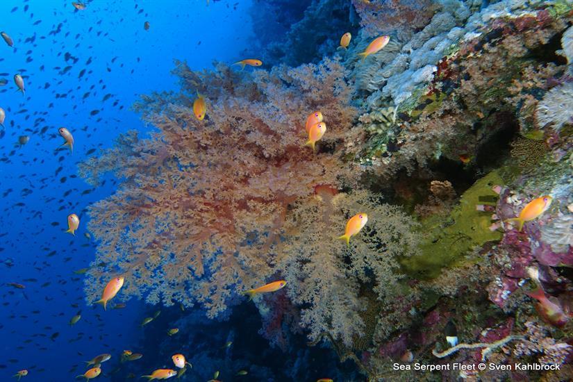 Beautiful Red Sea Reefs -  Sea Serpent Liveaboard