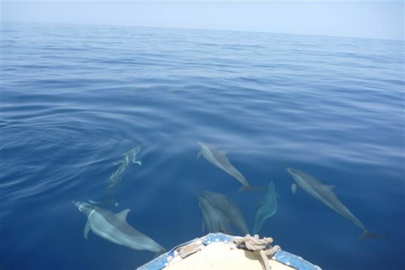 Dolphins enjoying the company