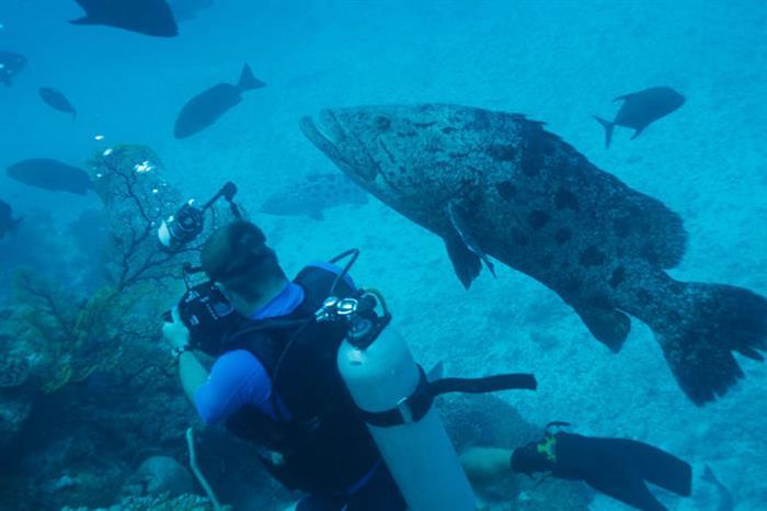 Diver & Cod Rowley Shoals