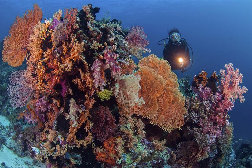 Brilliant hard and soft corals - Wakatobi, Sulawesi, Indonesia