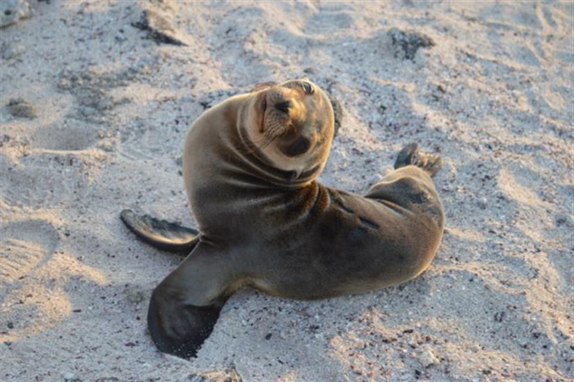 Up close with Sea Lion cubs!