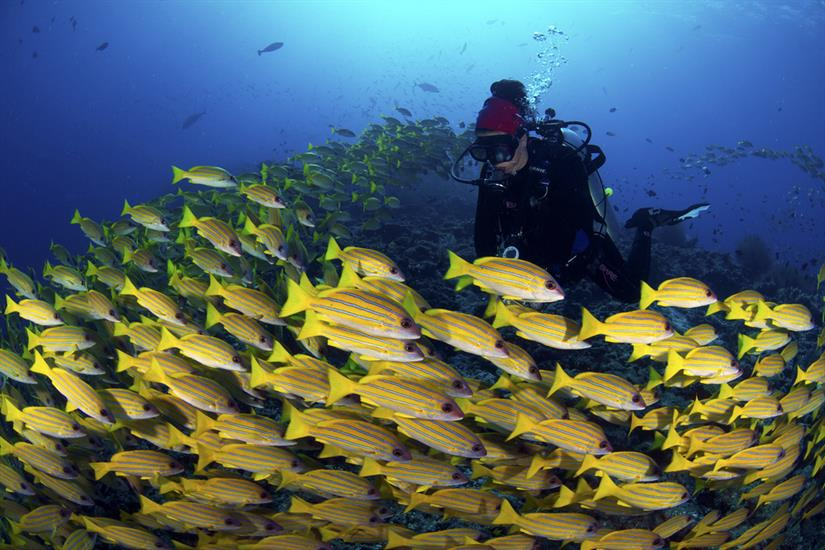 Amazing Diving in the Maldives