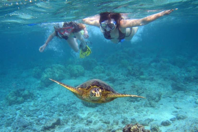 Snorkelling with Turtles - Indonesia