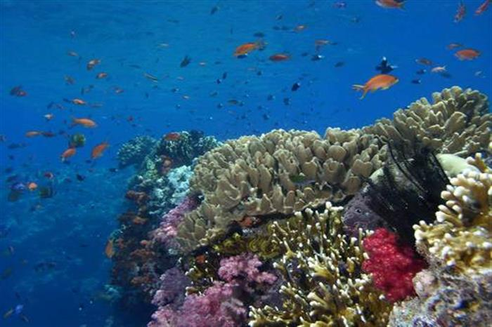 Pristine Reefs in the Solomon Islands