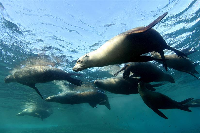 Dive with sea lions in the Sea of Cortez