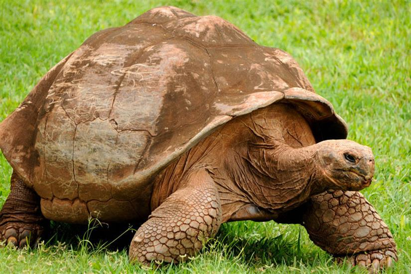 Giant Tortoises of the Galapagos