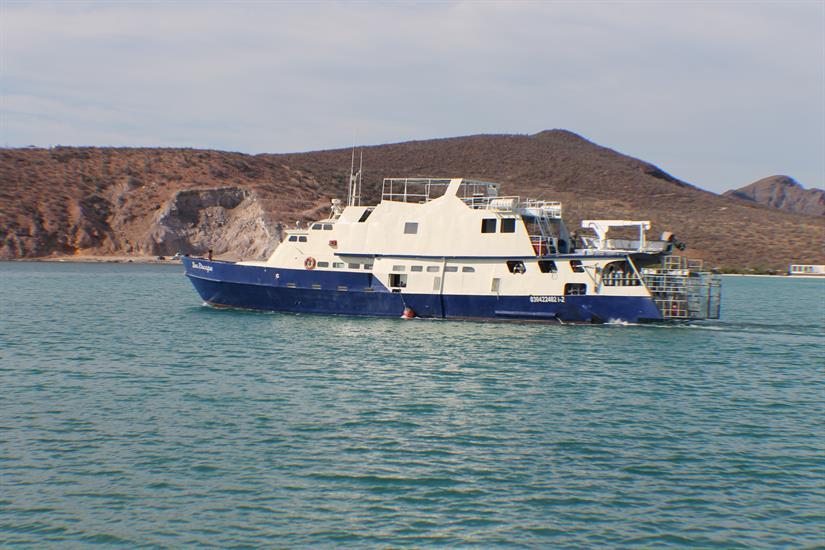 The Sea Escape - Mexico