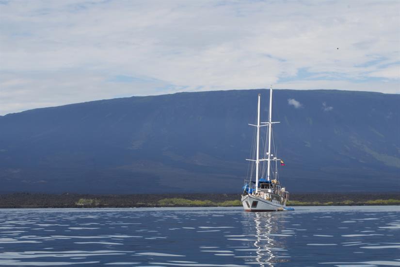 Cachalote Galapagos