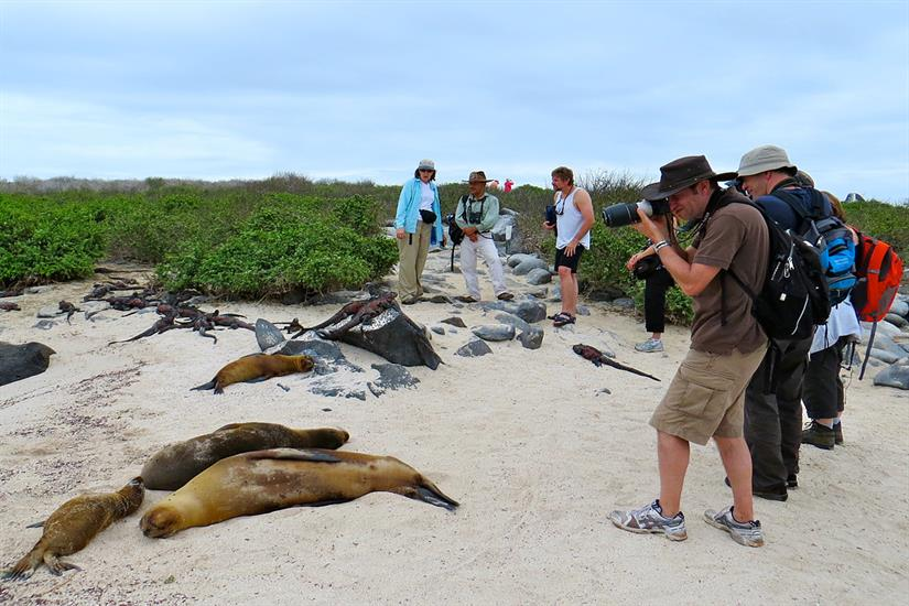 Up close and personal with Galapagos Sea Lions