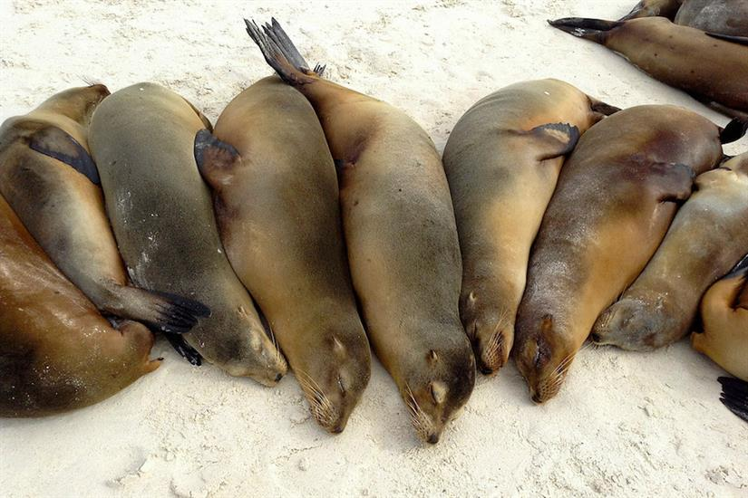 Sea lions in the Galapagos