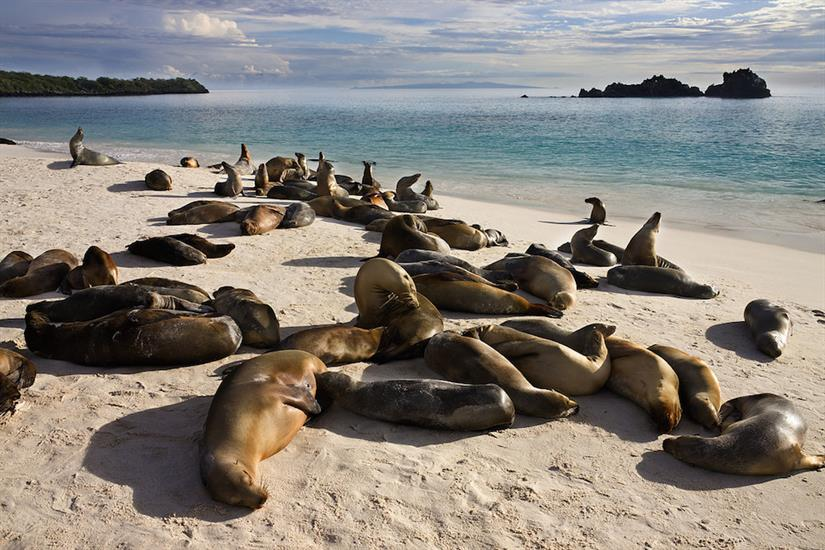 Colony of sea lions in the Galapagos