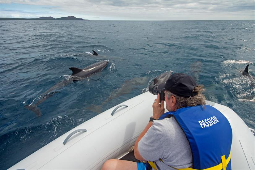 Dolphin spotting - MY Passion Galapagos
