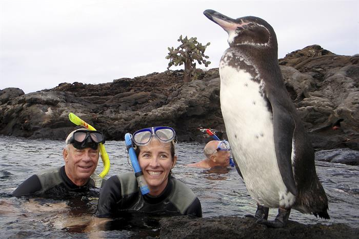 Snorkeling with Galapagos Penguins
