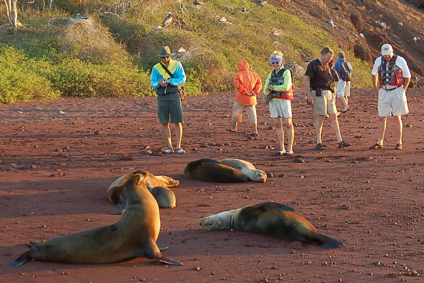 Up close with a Sea Lion colony in the Galapagos