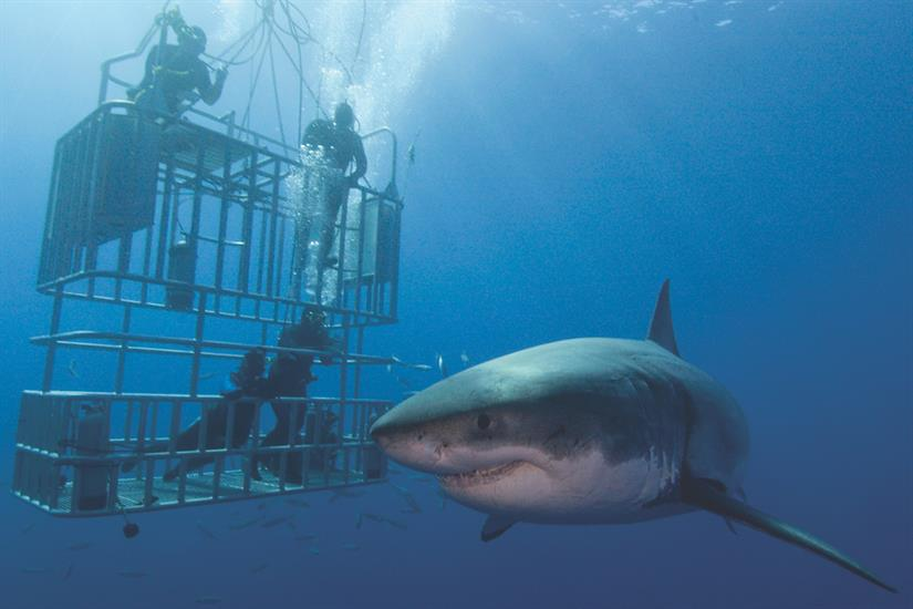 Dive with Great White Sharks in Guadalupe