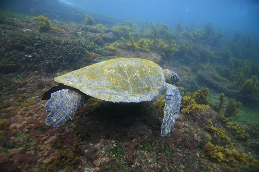 Snorkel with Turtles in the Galapagos