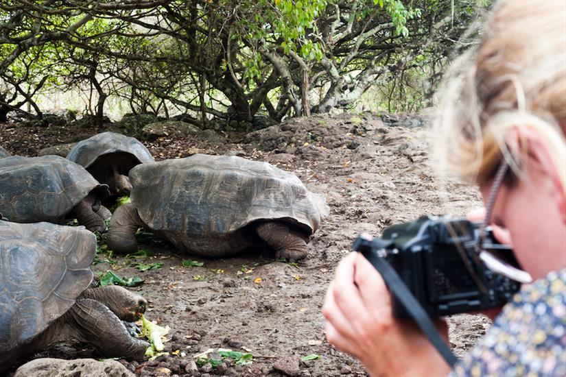 Giant Tortoises of the Galapagos