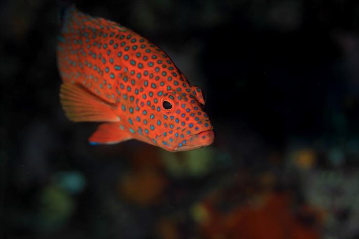 Colourful marine life in the Maldives