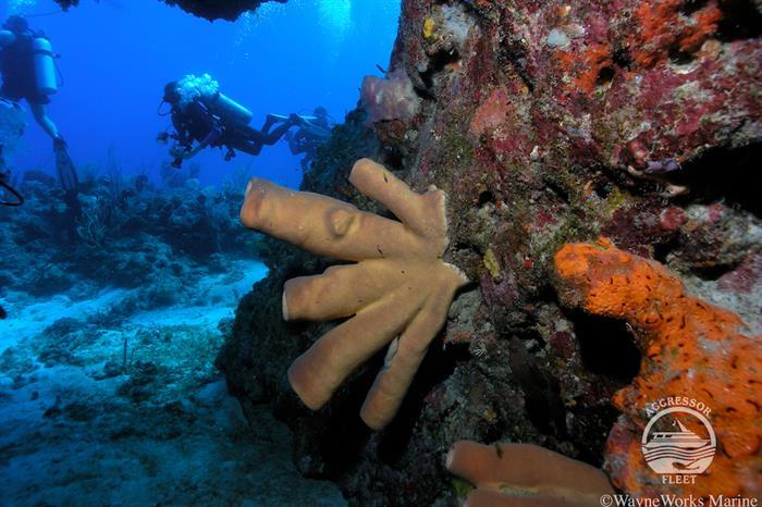 Beautiful diving in Honduras