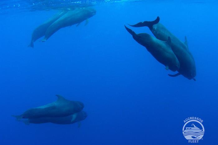 Dolphins in Roatan, Honduras