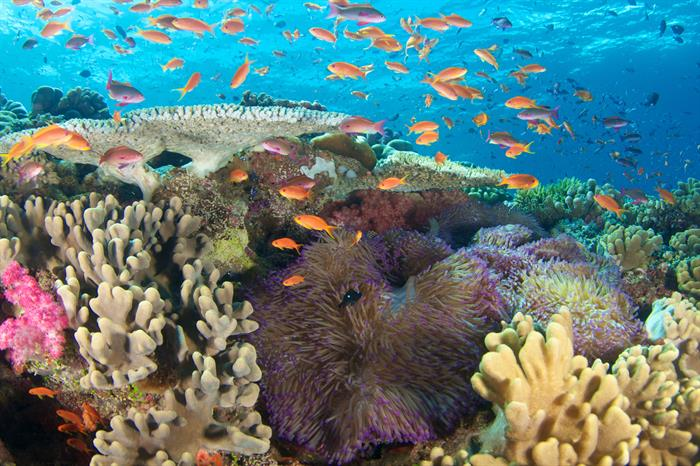 Colourful reefs in Fiji